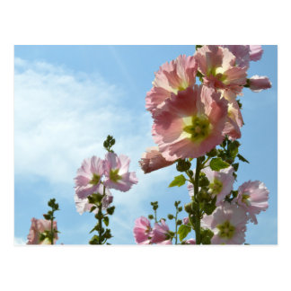 Hollyhocks: Japan Postkarte