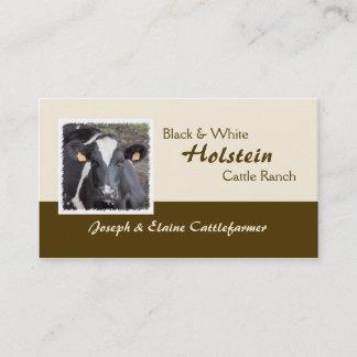 Holstein dairy or beef cattle photo