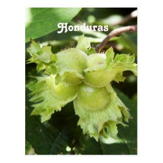 Honduras-Haselnüsse Postkarte