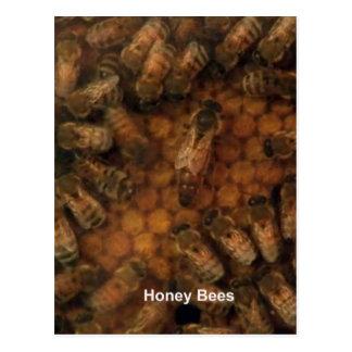 Honig-Bienen lassen dunklen Hintergrund DIY Postkarte