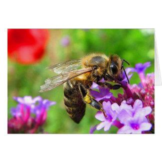 Honigbiene auf Verbene Karte