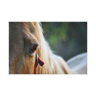 Horse Gespannter Galerie Druck