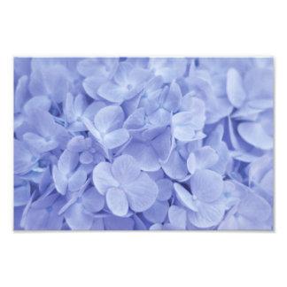 Hortensia bleu impressions photo