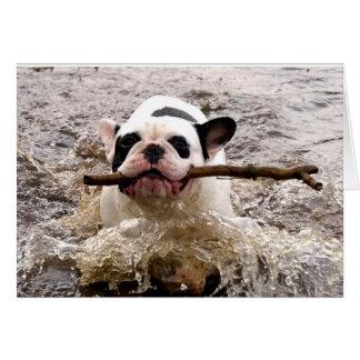 Howgillhounds französische Bulldogge Susan Karte