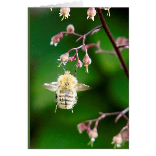 Howgillhounds kardiert Biene Mitteilungskarte