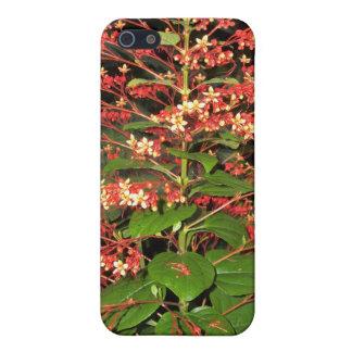 Hübsch in der roten blühenden Pflanze iPhone 5 Schutzhüllen
