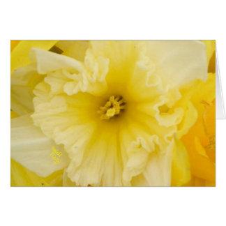 Hübsche gelbe Narzissen-Blumen Karte