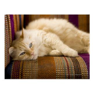 Hübsche gelbe tabi Katze, die auf Couch legt Postkarte