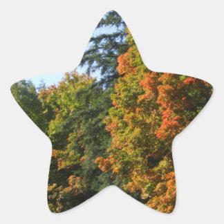 Hübsche Herbst-Ahorn-Bäume Stern-Aufkleber