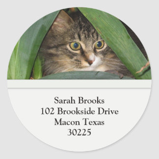 Hübsche Kitty-Adressen-Etiketten Runder Aufkleber