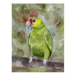 Hübsche Postkarte des Papageien-III