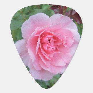 Hübsche rosa blühende Rose Plektron