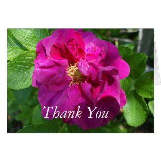 Hübsche Rose farbige Begonie Karte