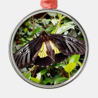 hübsche schwarze gelbe Schmetterlingsphotographie Rundes Silberfarbenes Ornament