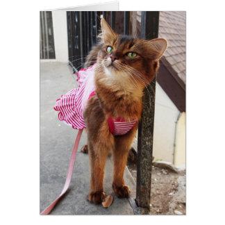 Hübsche somalische Katze im Kleid für Fall Karte