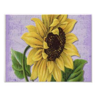 Hübsche Sonnenblume auf Blatt-Musik Fotodrucke