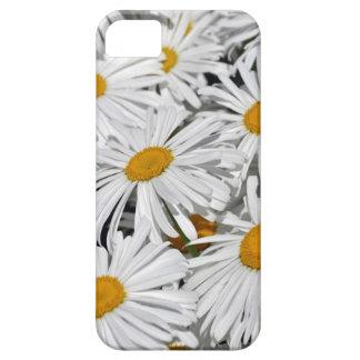 Hübscher Blumendruck des weißen Gänseblümchens iPhone 5 Schutzhülle