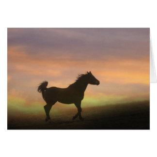 Hübsches arabisches Pferd danken Ihnen zu Karte