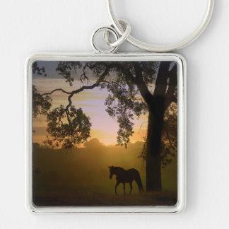 Hübsches Pferd im Sonnenuntergang-Schlüsselring Silberfarbener Quadratischer Schlüsselanhänger