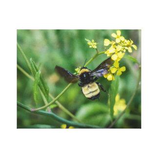 Hummel-Biene im Flug Leinwanddruck