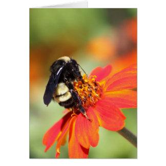 Hummel und orange Zinnia-Blume Karte