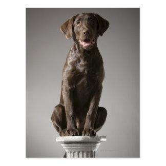 Hund auf einem Sockel Postkarte