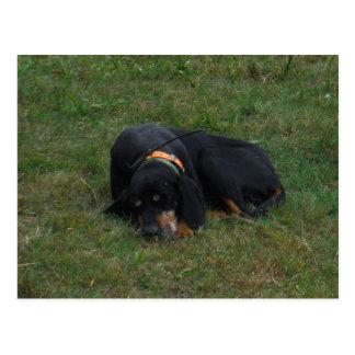 Hund ermüdet postkarte