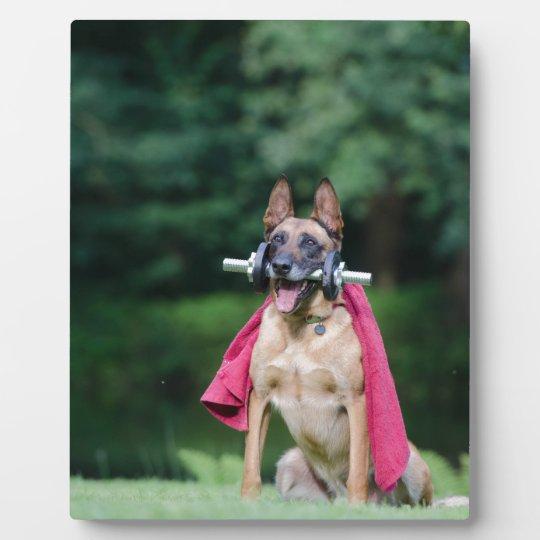 Hund Fotoplatte