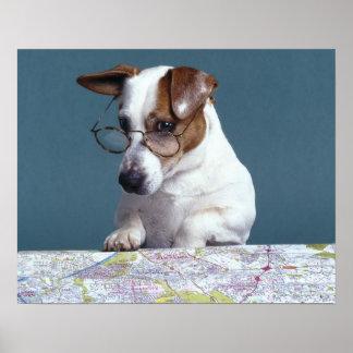 Hund mit Lesegläsern Karte studierend Poster