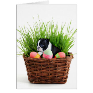 Hund Ostern Boston Terrier Karte