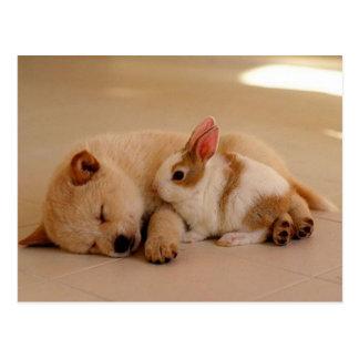 Hund und Kaninchen Postkarte