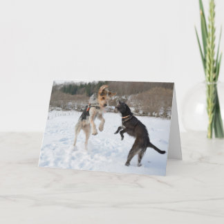 Dogs having fun in the snow Christmas