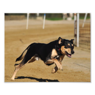 HundeAgilityüben Photographie