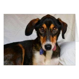 HundeFoto-Karte - Wacholderbusch Karte