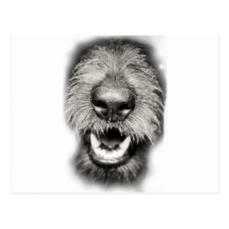 Hundegesichts-lustiges Lächeln Postkarte