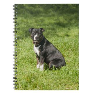 Hundegewundenes Foto-Notizbuch Notizblock