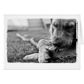 Hundeliebhabergrüße Grußkarte