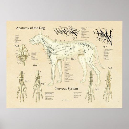 HundeNervensystem-Nerven-Anatomie-Diagramm Poster | Zazzle.ch