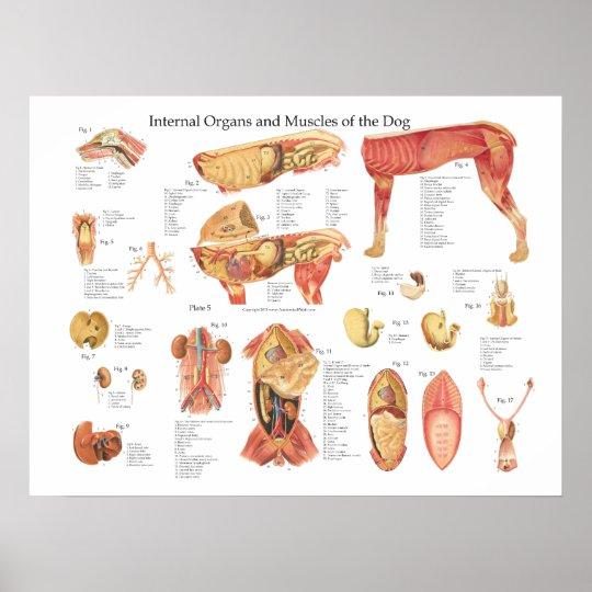 HundeOrgan-Anatomie-Plakat-Diagramm Poster | Zazzle.ch