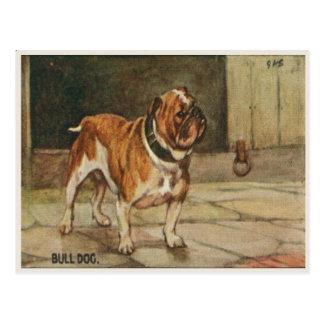 Hundepostkarte mit starkem Stier-Hund Postkarte