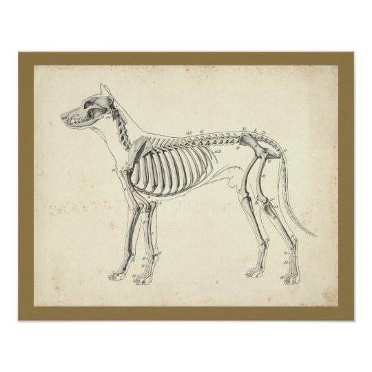 Hundeskelett-Knochen-Veterinäranatomie-Druck Hundeskelett-Knochen ...