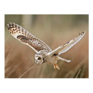 Hunting Owl Postkarte