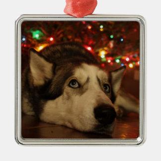 Husky-Verzierung Silbernes Ornament