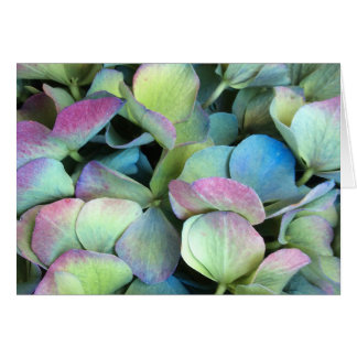 HYDRANGEA-Mehrfarbenblumenblätter --- Karte