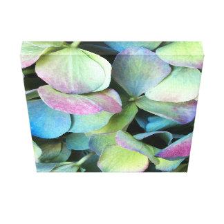 HYDRANGEA-Mehrfarbenblumenblätter --- Leinwanddruck