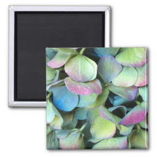 HYDRANGEA-Mehrfarbenblumenblätter --- Quadratischer Magnet