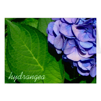 Hydrangea notecard karte
