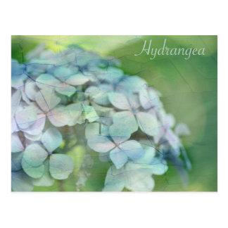 Hydrangea Postkarte