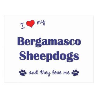 I Liebe meine Bergamasco Schäferhunde (mehrfache Postkarte