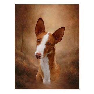 Ibizan Jagdhund Postkarte